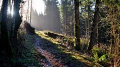 11-Path to the shrine