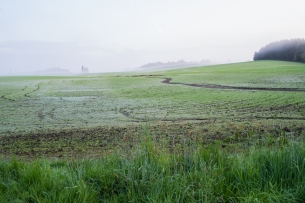 Spring field with dew. Carlton, OR