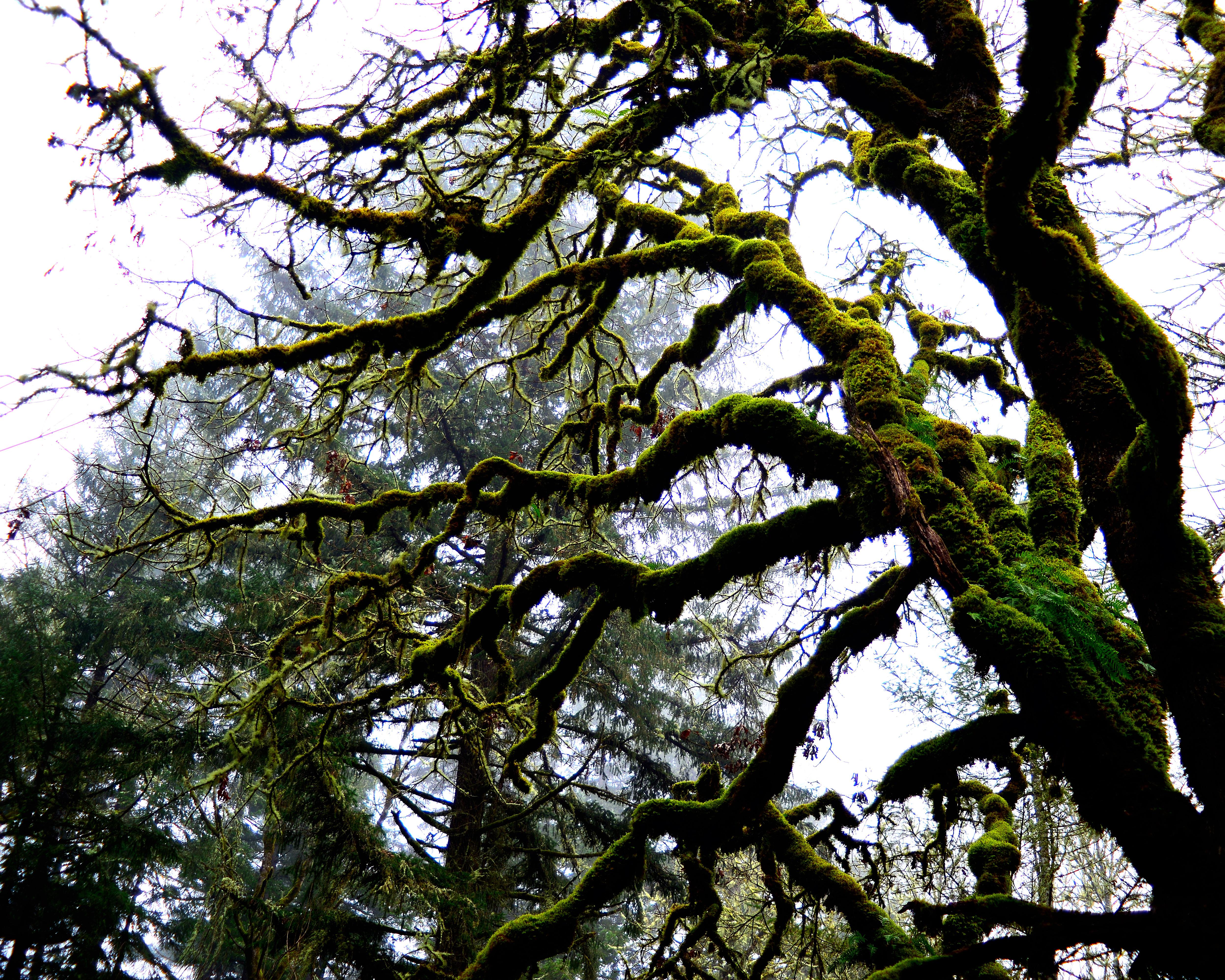 5-Moss on sleeping oak